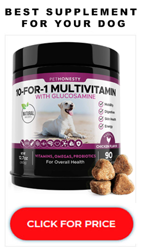 best-dog-supplement